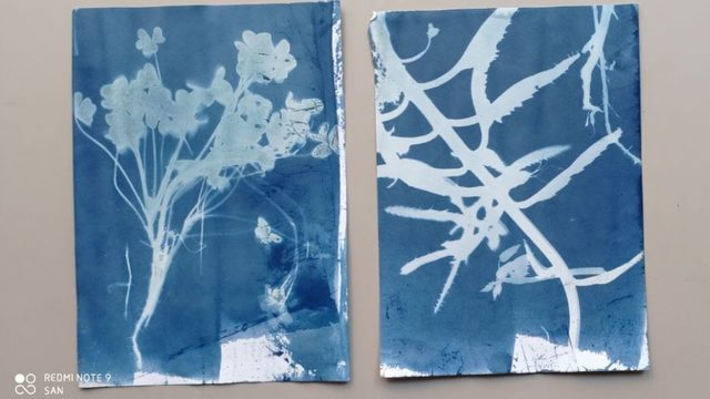 Pack of 2 Cyanotypes
