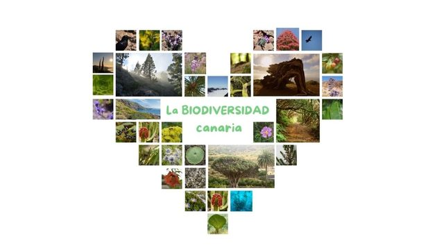 My big green and solidary heart