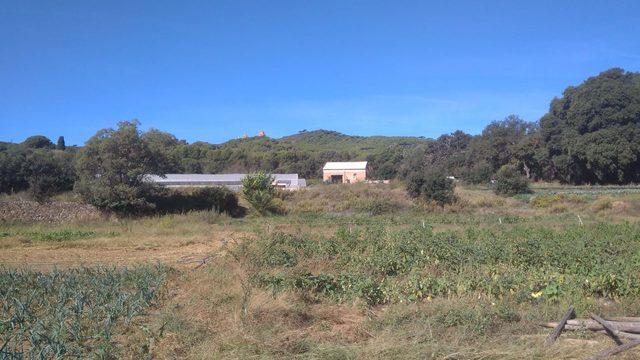 Visita guiada + Taller agricultura en el huerto