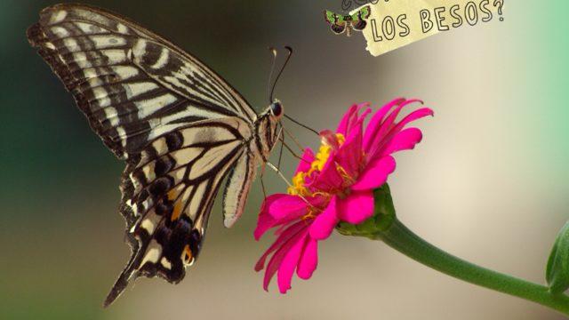 Beso de mariposa:Postal dedicada + 1 cuento