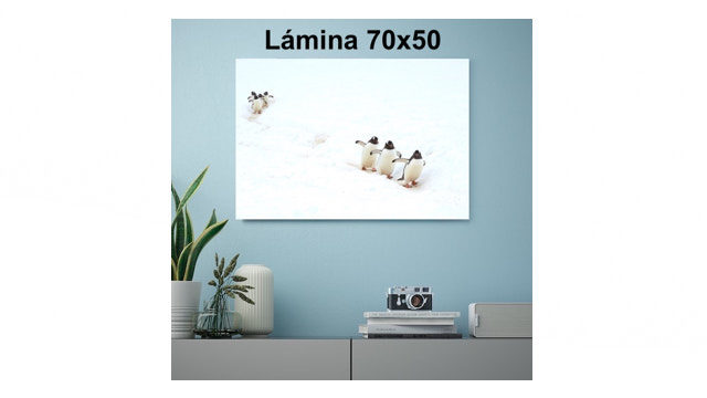 Lamina 70x50cm, firmada y dedicada