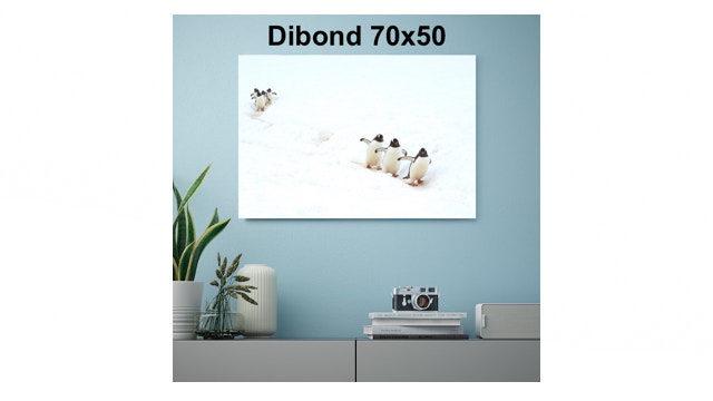 Cuadro en Dibond 70x50cm, firmado y dedicado