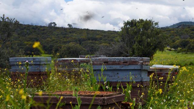 Las abejas en el colmenar. Taller sobre la vida de las abejas y el trabajo del apicultor+Bote de miel.