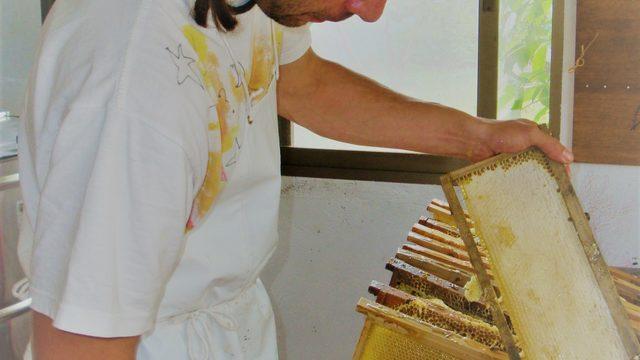 Jornada intensiva de aprendizaje y  extracción de miel + 3 botes de miel+Panal de miel.