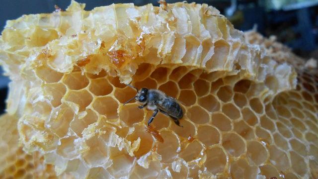 Especial colegios. El misterioso y apasionante mundo de las abejas. Taller para grupos de niñ@s sobre la vida de las abejas  y el oficio del apicultor.