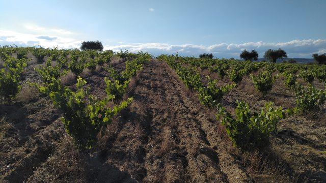Visita al viñedo