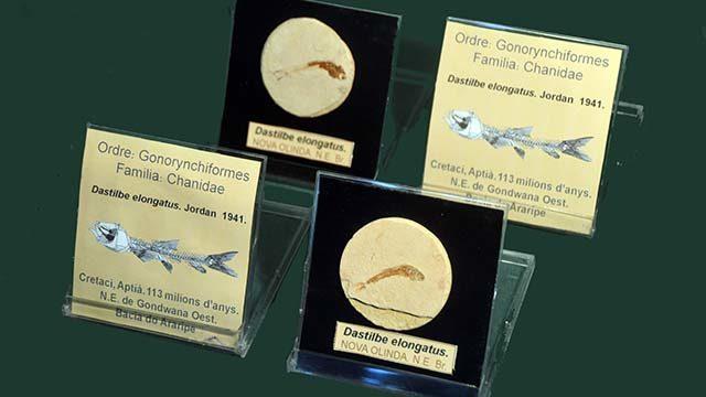 """El llibre, etiquetes originals i un fòssil de col·lecció del """"Museo Pedagógico de Ciencias Naturales"""""""