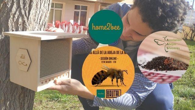 BEE-SITTER