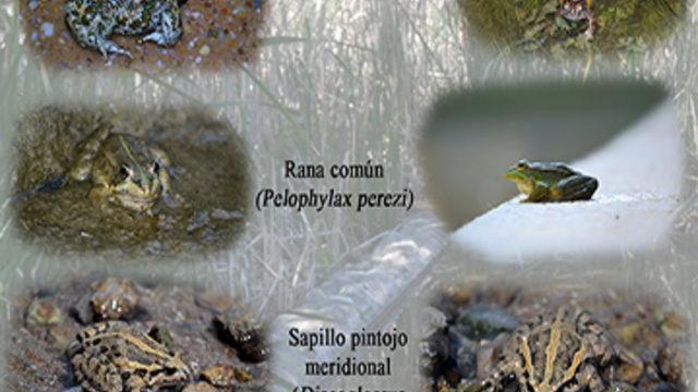 Libro firmado y dedicado + Póster de anfibios