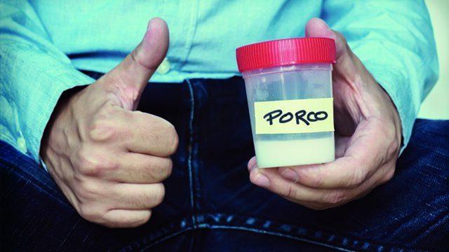 Porco Forever