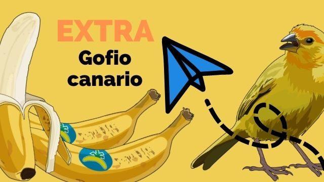"""EXTRA """"Gofio canario"""""""