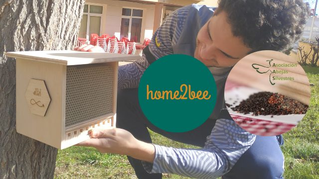 REPONEMOS BEE-SITTER PIONERXS