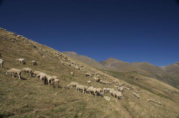 Pasturar per les muntanyes de la Vall d'Àssua. Una de les recompenses de la nostra campanya Xisqueta