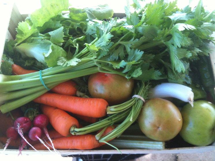 Verd de Terra, verdures de temporada.