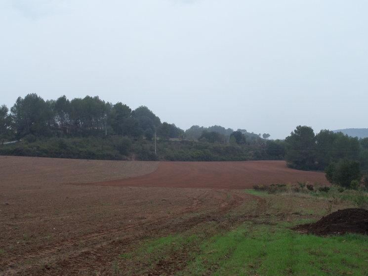 Pisana sembrada octubre 2016 a can Mercaderet