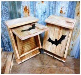 Nidos murciélagos