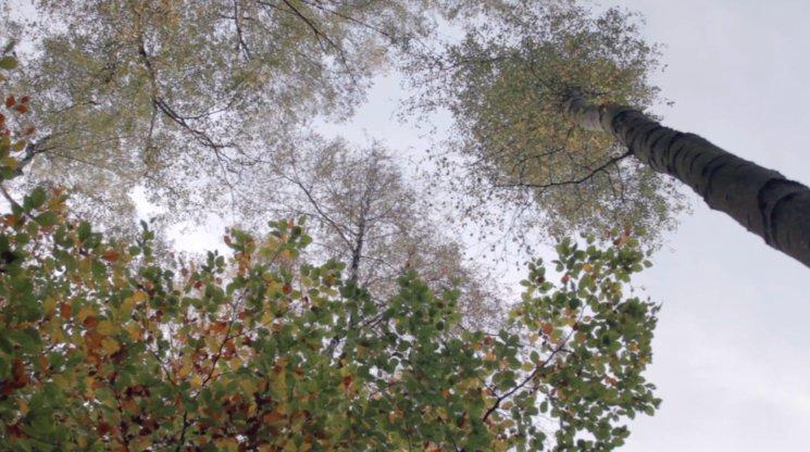 Bosque de Reinhardswald