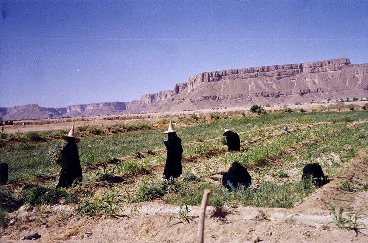 Campesinas de Hadramut. Yemen