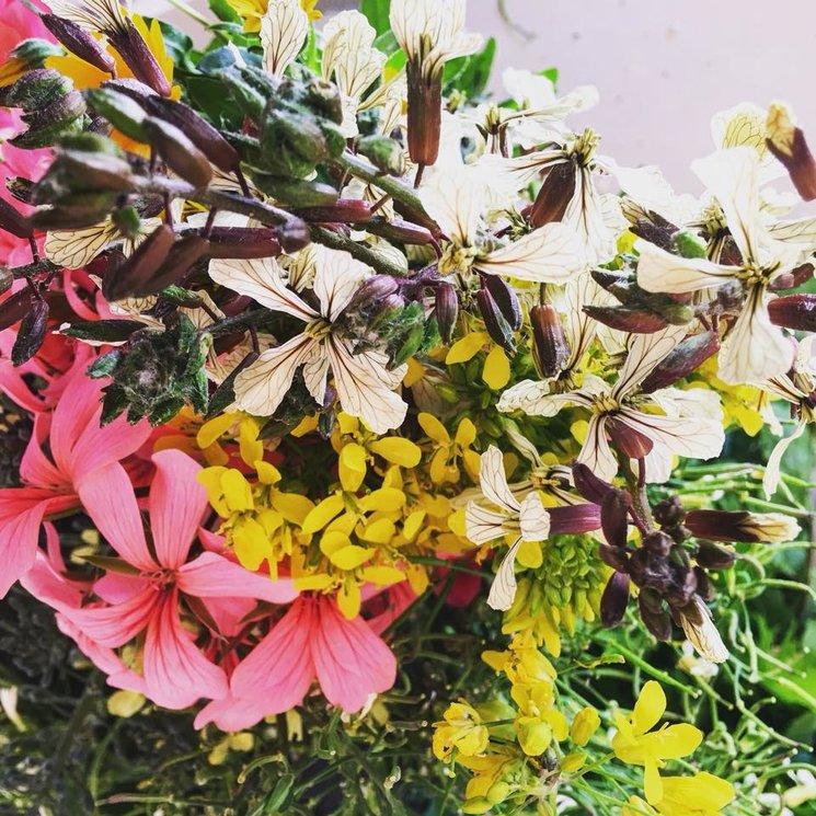 Último día de este Verkami: gracias, gracias, gracias y muchas flores
