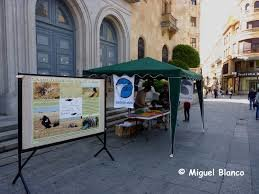 Stand informativo en la Plaza de los Bandos