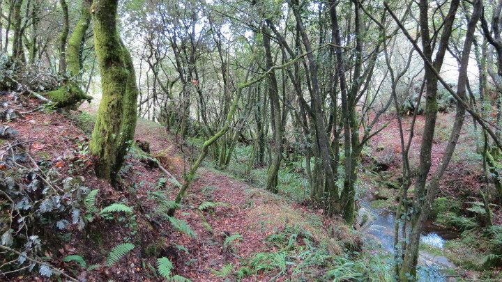 Imagen del bosque de Froxán (Galicia) donde se plantarán frondosas por cada ejemplar de la novela que se fabrique.