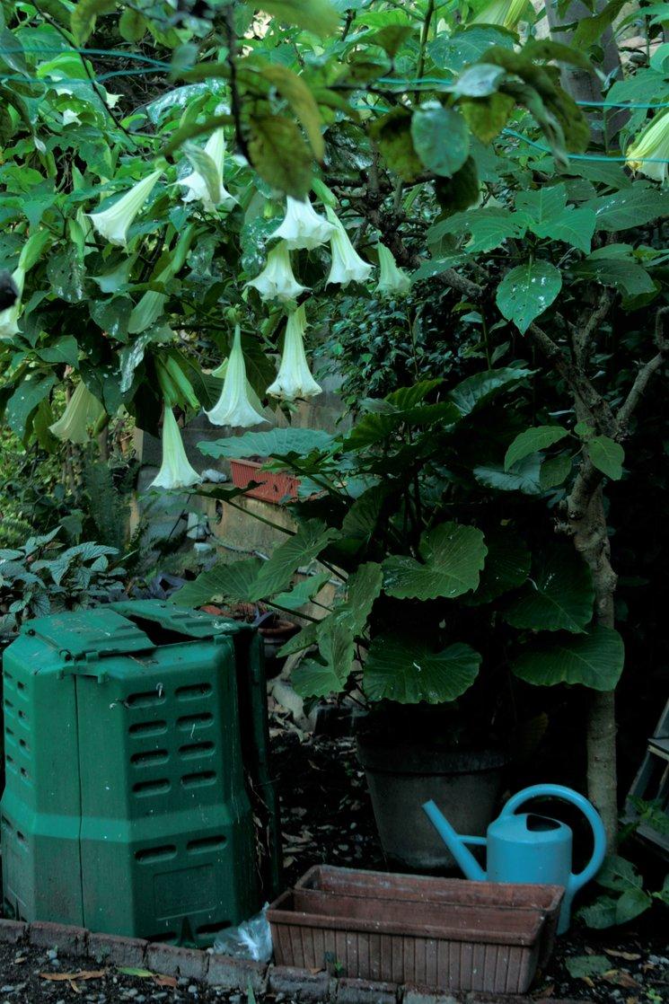 En el jardín del caqui