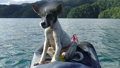 En  Kon-tiki, el gos aventurer