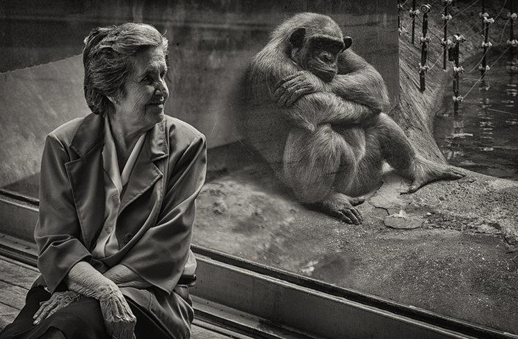 visita al Zoo de Barcelona