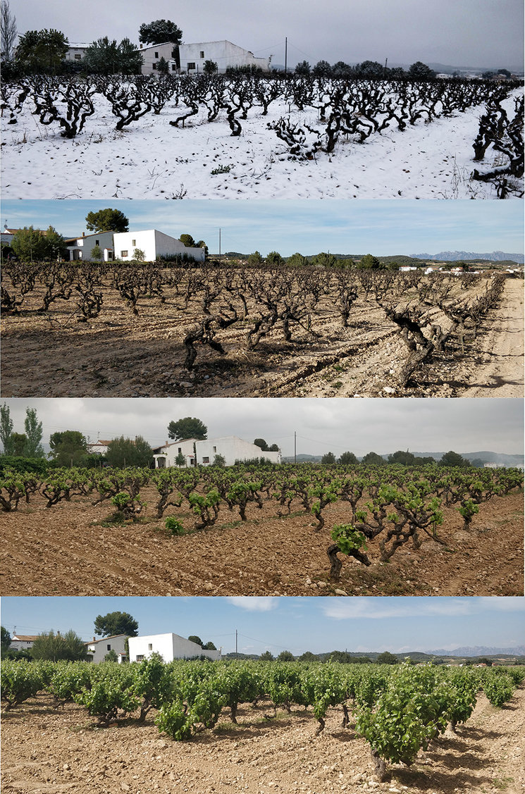 Las diferentes estaciones en el viñedo Cal Escalló