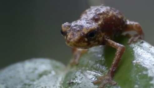 Recuperar el hábitat para Anfibios y Reptiles