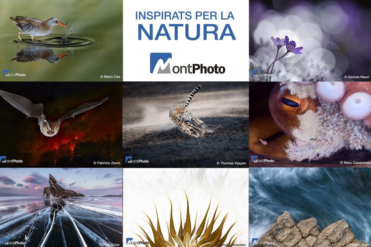 Diversidad y creatividad en Inspirats per la natura 2018