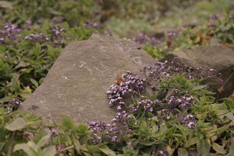 Flora y Fauna en las lomas