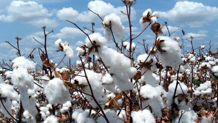 Producimos con algodón Orgánico y Tintas Ecológicas, respetando el medio ambiente y las personas