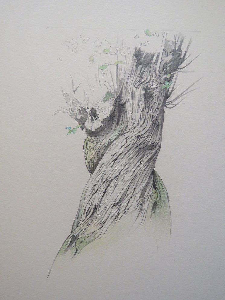 Ilustración tronco de castaño