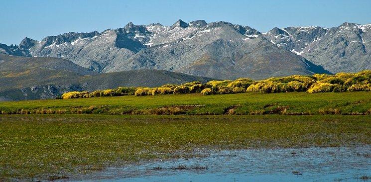 Sierra de Gredos. Floración del Piorno