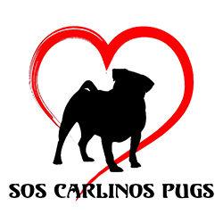 SOS Carlinos ayuda a los perros que más lo necesitan