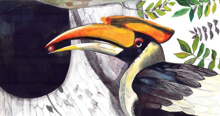 El cálao bicorne ilustrado por Pilar Mena