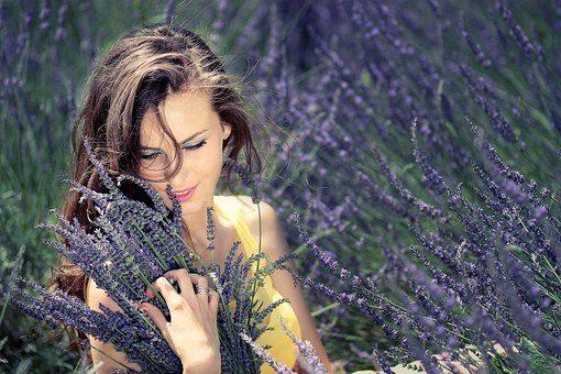Flores de Lavanda recién recolectadas contra el estrés