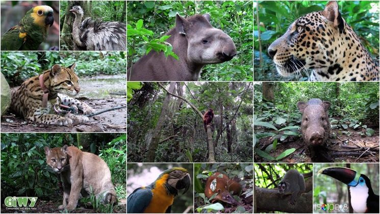 wild animals of Ambue Ari sanctuary