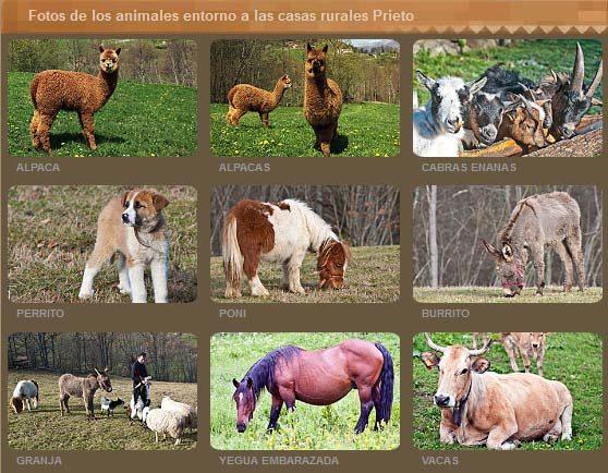 Granja de animalesAsturias Casas Prieto - Quirós a