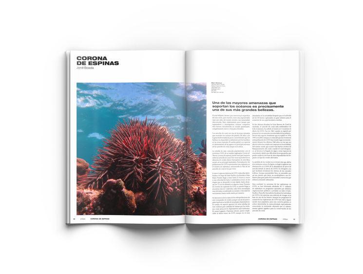 ¿Sabíais que existe una estrella de mar que acaba con los corales?