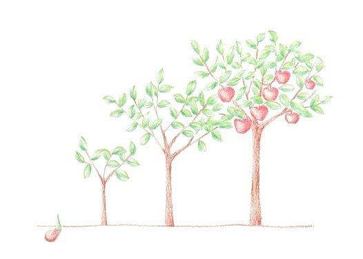 Así crecen los manzanos de Juanito.