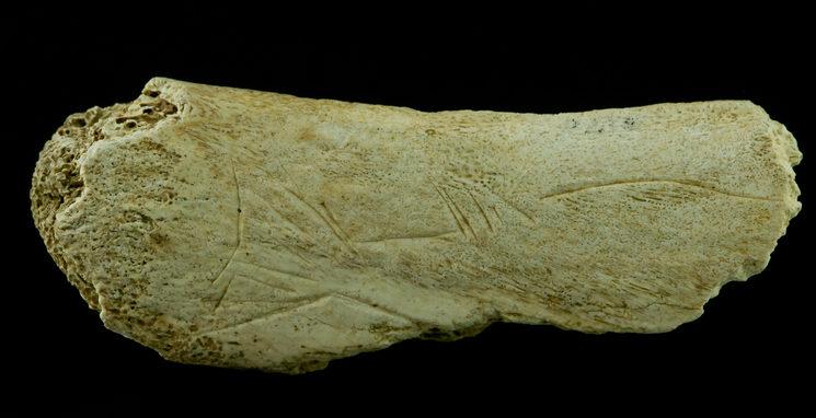 Costilla grabada con la representación de un salmón (Cueva de las Caldas, Priorio, Asturias)