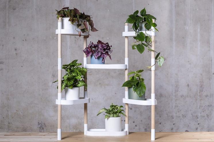 La foto de portada: estantería de 6 bandejas con 6 plantas
