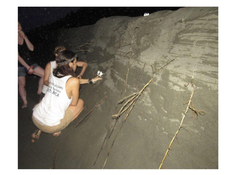 Bermas por erosión en playas de nidificación de tortugas marinas