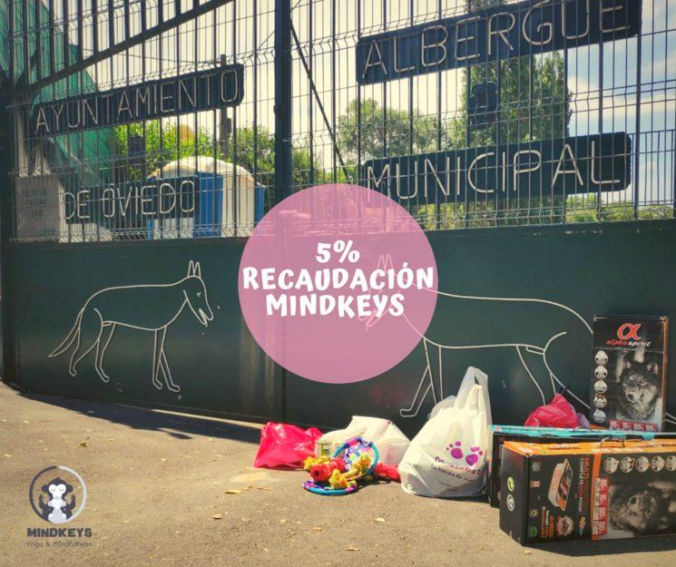 Donación Albergue Animales Oviedo