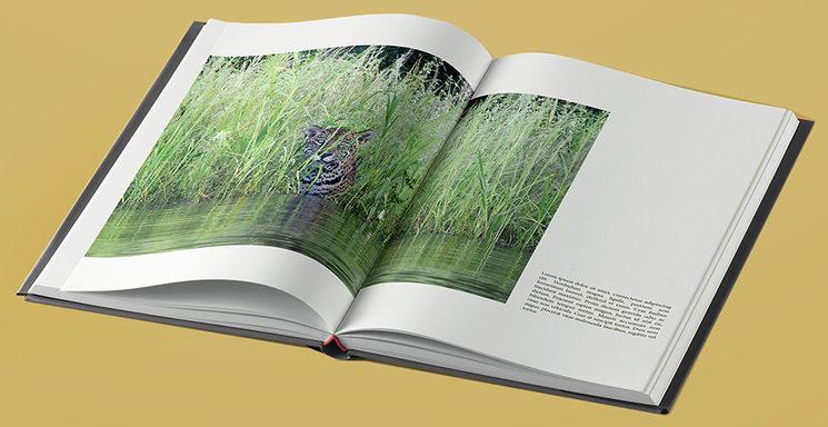 El libro se está maquetando este verano y la impresión se realizará en otoño. Los libros se enviarán a partir de diciembre.