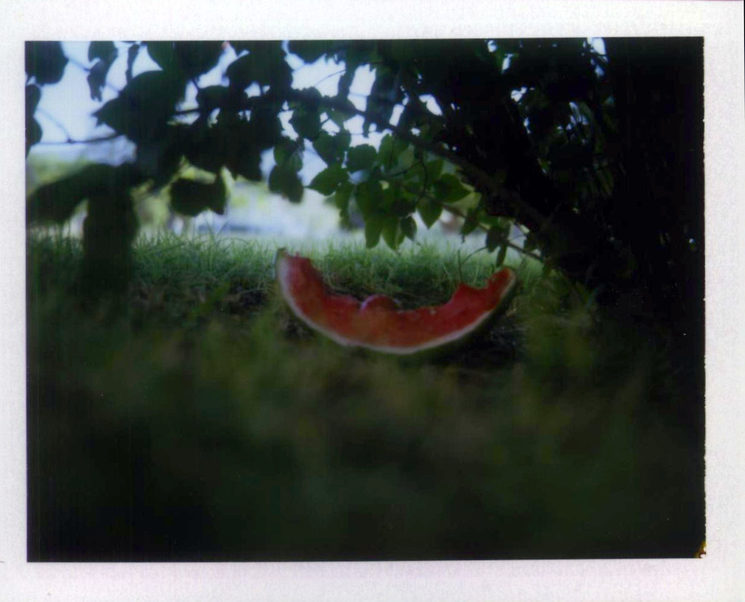 Watermelon, polaroid