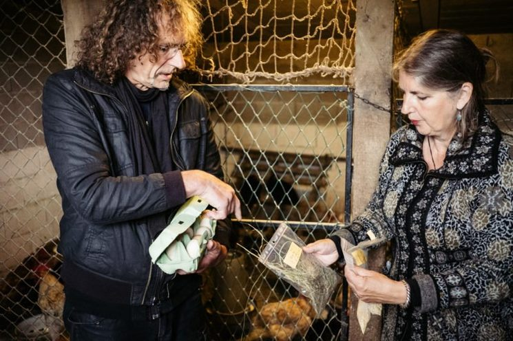 ToxicoWatch fundazioko kideak arrautzen laginak hartzen. (Argazkia: Donostitik.com)