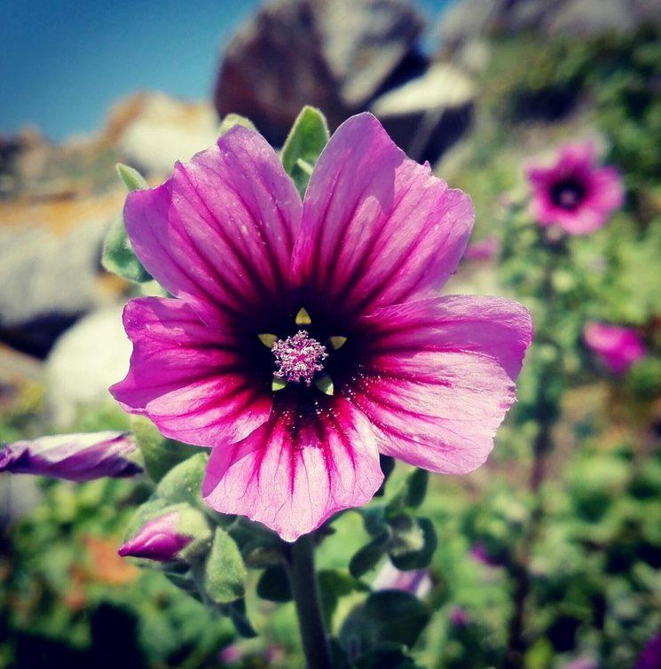 Flor especial para un domingo de choiva